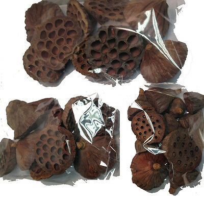30 Dried Lotus Pods - Small Medium And Large Mix For Christmas Festive Wreaths