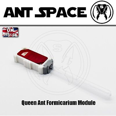 Queen Ant Formicarium Module With Moisturizing System