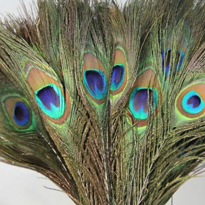10Pcs Real Natural Peacock Tail Feathers Home Room Decor DIY Wholesale Lots