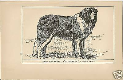 Rare 1900 UK Dog Art Pen & Ink Print RH Moore Rough Coated ST ST. SAINT BERNARD