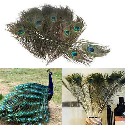 10Pcs Real Natural Color Peacock Feathers Tail Eyes DIY Decorations 10 inches