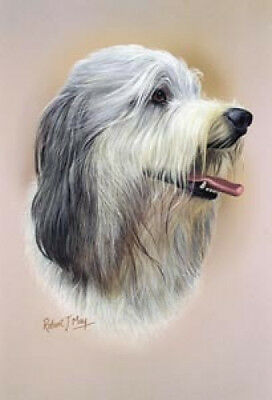 Robert J. May Head Study - Bearded Collie (RMDH016)