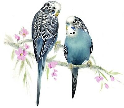 "Blue Budgie Parakeet Birds 1 pc 8-1/2"" X 6"" Waterslide Ceramic Decal Xx"