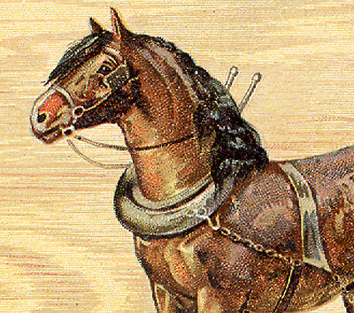 1880's small LION COFFEE TRADE CARD, BEAUTIFUL CANADIAN HORSE IN HARNESS  K904