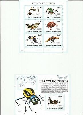 Comoros Insects Mnh