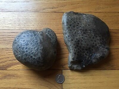 LOT OF 2  BEAUTIFUL  MICHIGAN PETOSKEY STONES - Total Weight Over 5 Pounds!