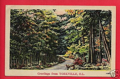 Yorkville Il Greetings From Path In Woods  Postcard