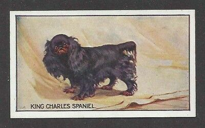1926 UK George Vernon Stokes Dog Art Sanders Custard Card ENGLISH TOY SPANIEL