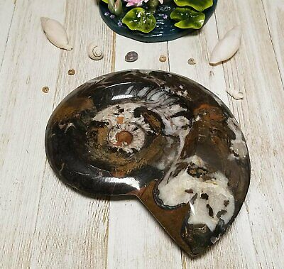Ammonite Gemstone Fossil
