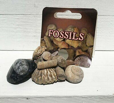Bag of Fossils