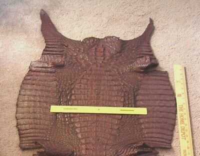 HUGE! Chocolate Brown Crocodile for Motorcycle Seat, Horse Saddle or Display