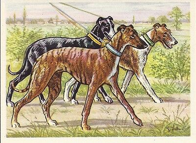 1952 Austria Tobacco Company Bildwerk Dog Art Card RACING WHIPPET WHIPPETS Leash