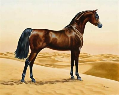 LMOP831 strong animal horse in desert hand painted art oil painting on canvas