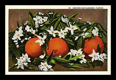 Dr Jim Stamps Us Oranges And Blossoms Florida Topical Postcard