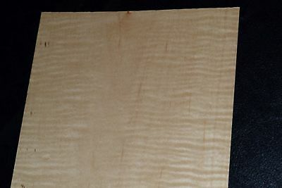 Curly Maple Raw Wood Veneer Sheets 5 x 58 inches 1/42nd               8632-50
