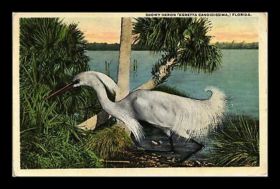Dr Jim Stamps Us Snowy Heron Florida Topical View Postcard
