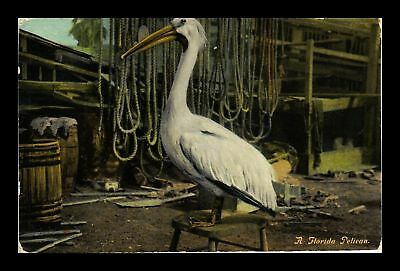 Dr Jim Stamps Us Florida Pelican Topical Leighton Company Postcard