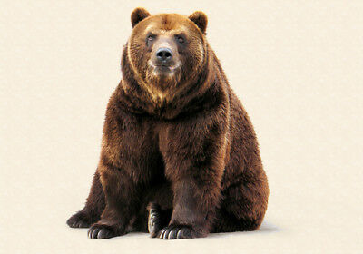 BEAUTIFUL BROWN BEAR * LARGE A3 SiZE  QUALITY CANVAS ART PRINT