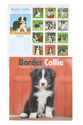 Border Collie Puppies Puppy Breed of Dog 2019 Mini Wall Calendar