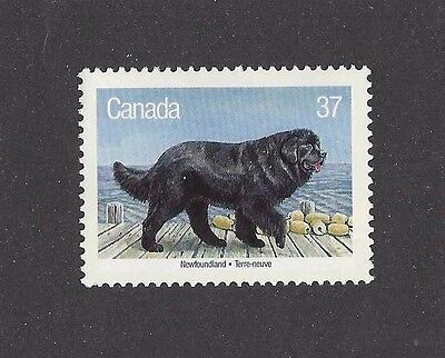 Dog Full Body Art Portrait Postage Stamp NEWFOUNDLAND Canada Native Breed MNH