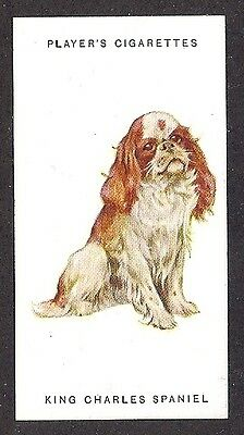1931 UK Arthur Wardle Dog Art Player Cigarette Card Blenheim ENGLISH TOY SPANIEL