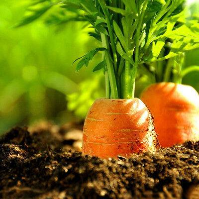 100Pc Carrot Seeds Organic Vegetable Balcony Potted Plant Home Garden Decor Cold