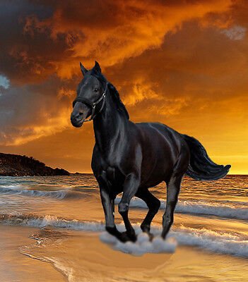 """high quality oil painting 100% handpainted on canvas """"a black horse"""""""
