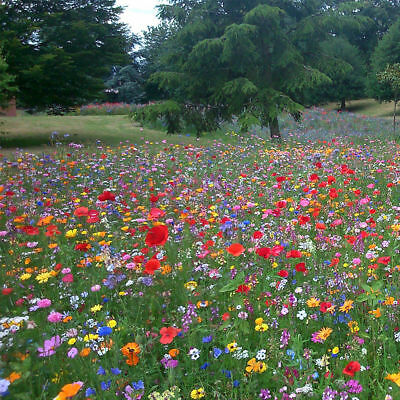 WILD FLOWER SEEDS Wild Scented Bee Cottage garden plant Mix Meadow NO GRASS