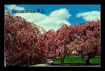 Dr Jim Stamps Us Tree In Park Succasunna New Jersey Chrome View Postcard