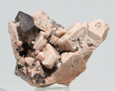 Smoky Quartz Terminated Crystal Cluster Mineral Specimen in Matrix ARGENTINA