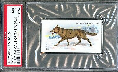 1922 Adkin & Sons WOLF Wild Animals of the World Trade Card PSA 7