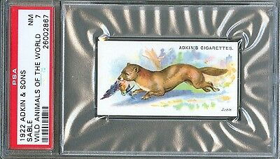 1922 Adkin & Sons SABLE Weasel Wild Animals of the World Trade Card PSA 7