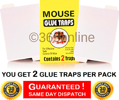 Mouse Trap Mice Trap. Glue Traps ,     FREE 1ST CLASS POSTAGE
