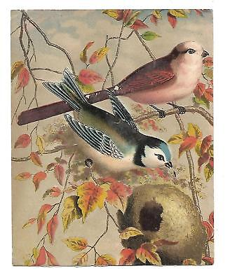 Red Bird Blue Bird on Branch Autumn Leaves No Advertising Vict Card c1880s