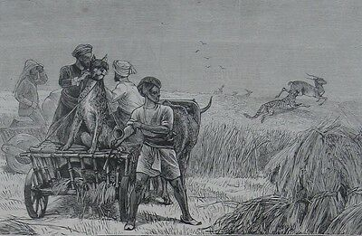 1872 Antique Engravings - HUNTING IN INDIA - Boar, Tiger, Antelope with Cheetahs