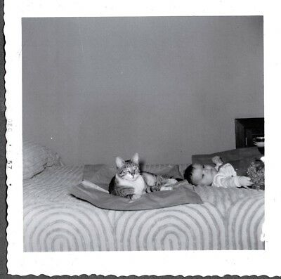 Vintage Photograph 1957 Baby & Striped Cat Kitten Rest On Bed Posing Old Photo