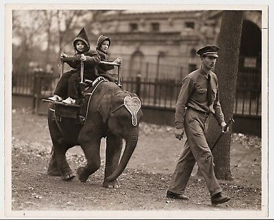 ELEPHANT RIDE AT ZOO by LEO LIEB * New York from PM *VINTAGE c1940 STAMPED photo