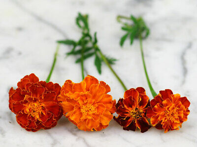 Marigold French -Double Brocade Mix - 30 Gram - Approx 10,500 Seeds - Bulk