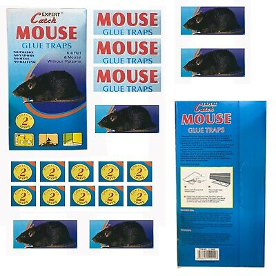 Rat Glue Trap 2pc For Effective Safe Control Of Rat  Mise Extra Strength