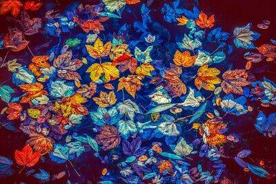 """high quality oil painting handpainted on canvas """" autumn leaves"""""""