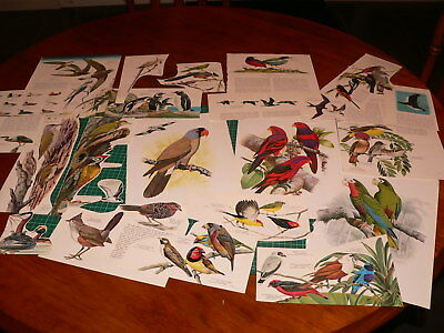 24pc bird ephemera cut outs pages, altered art mixed media decoupage journal PK3