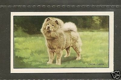 Rare 1936 UK Dog Art Full Body Study Gallaher Cigarette Trade Card Red CHOW CHOW