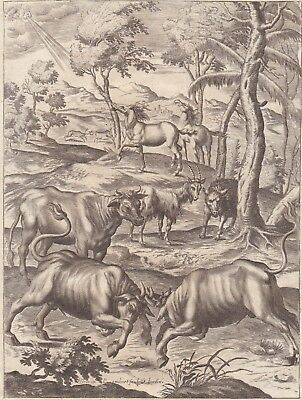 "1701 Virgil's ""Georgics"" Engraving - Battle of the Bulls - John Dryden's Verse"