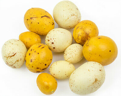 12 Assorted Natural Look Plastic Bird Eggs for Crafts - 3.7cm to 5.5cm