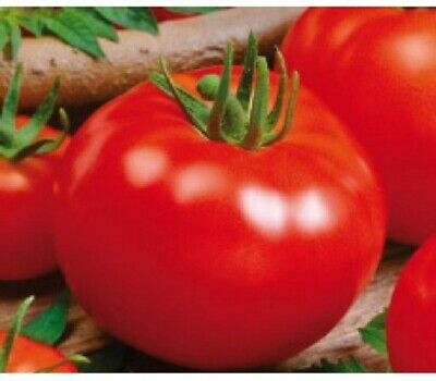Tomato Campbell 33 - 100 Seeds