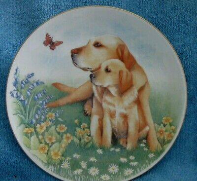 ROYAL WORCESTER Collectable DISPLAY PLATE  Dogs and Puppies LABRADORS