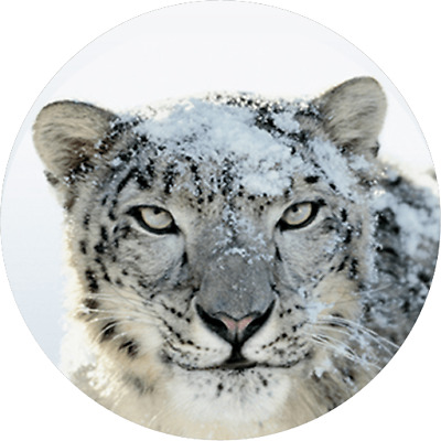 Mac OS X 10.6 Snow Leopard - Instant DOWNLOAD