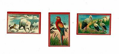 3 Old Sweden Uddevalla 1892 matchbox labels depicting Parrot etc.