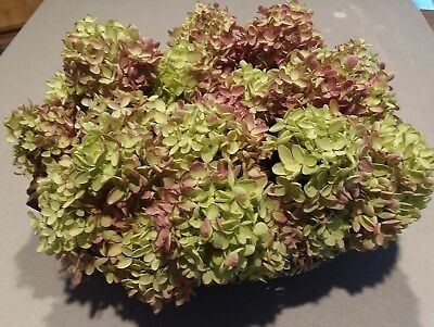 "20 DRIED Cream + Mauve  HYDRANGEA BLOOMS  organically grown 3- 5""  heads"