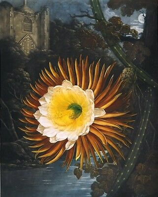 """high quality oil painting handpainted on canvas """"A night-blooming  """""""